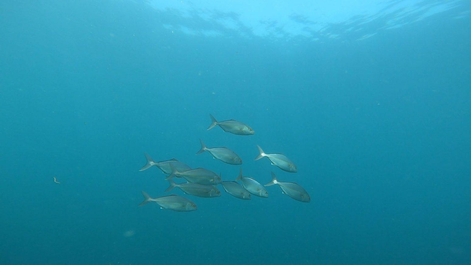 圧倒的な魚の量です(*^▽^*)2020-09-28