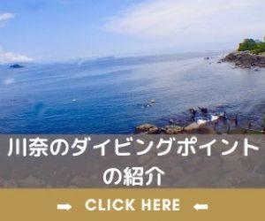 川奈ダイビングの紹介